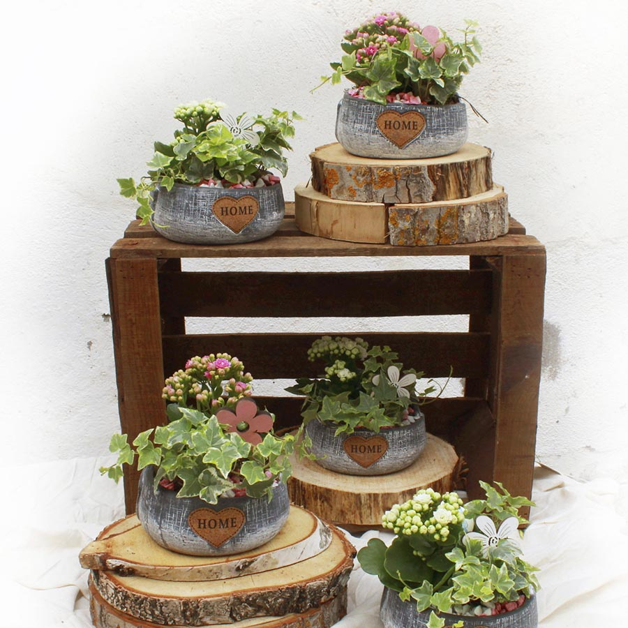 Centro de mesa con plantas variadas