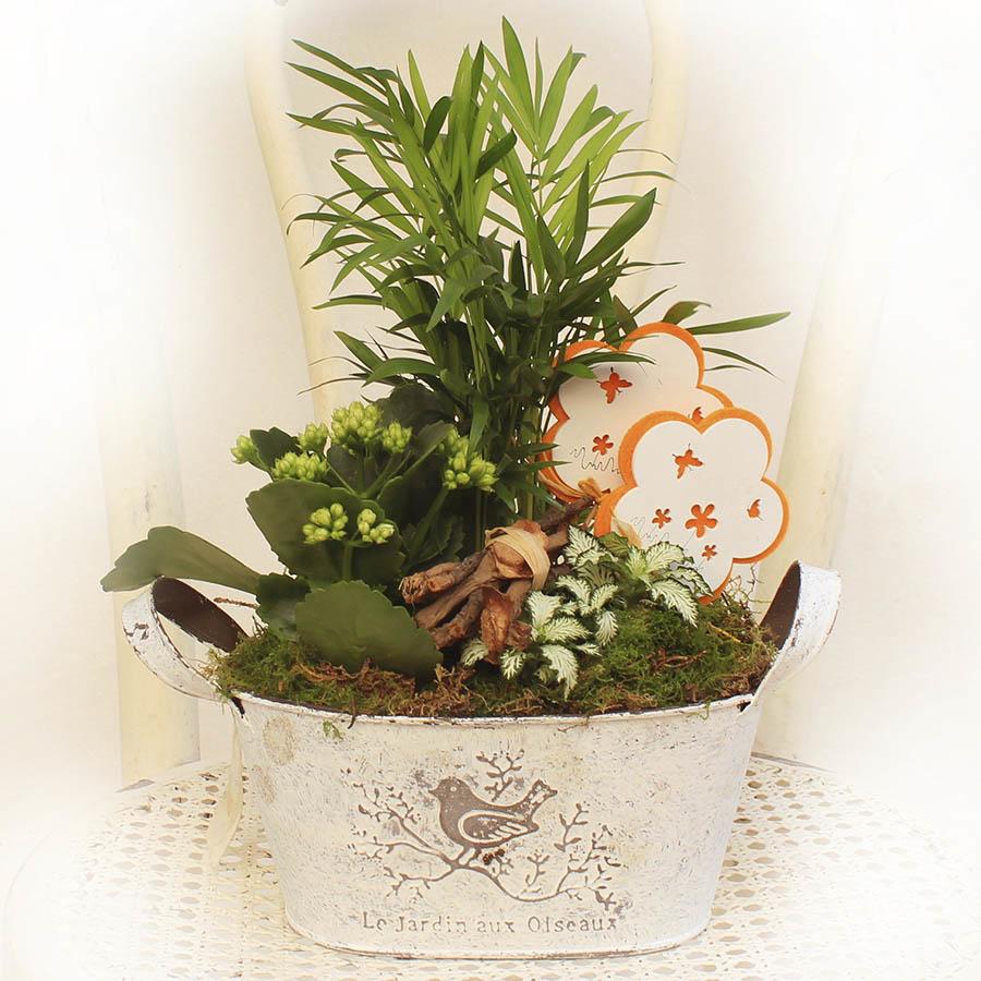 Jardinera con plantas de Interior