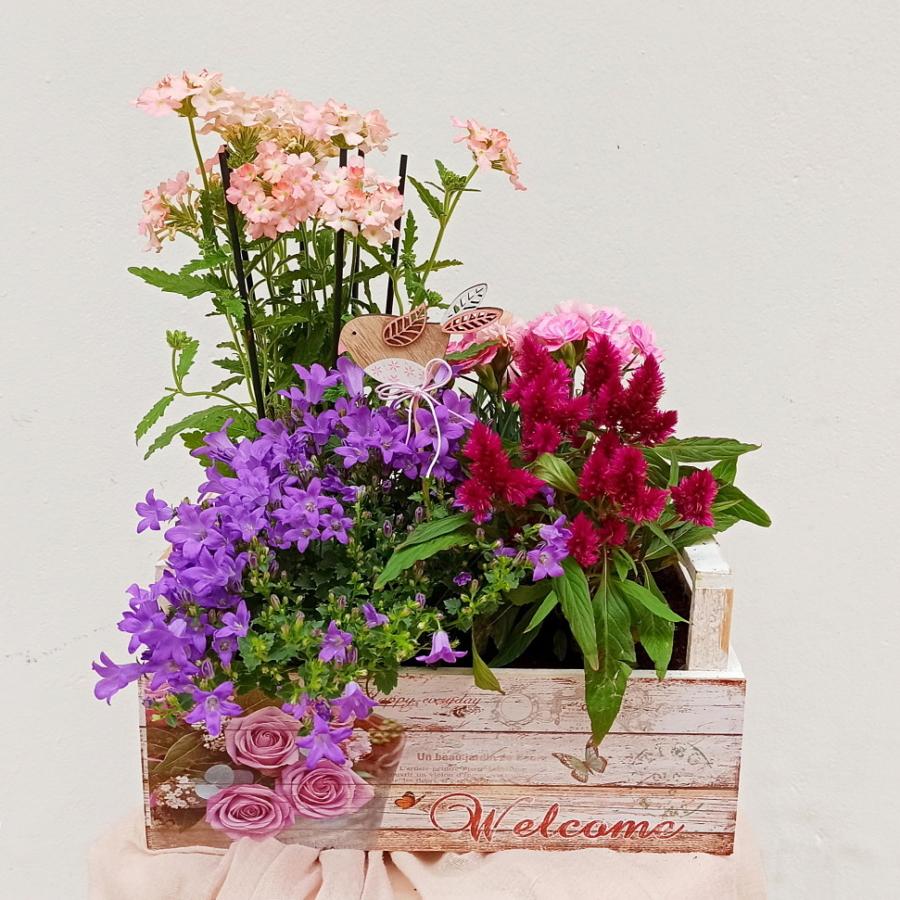 Composición de plantas flores